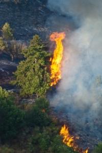 forest fire_danilo rizzuti